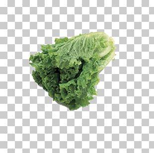 Vegetable Fruit Auglis Food Lettuce PNG