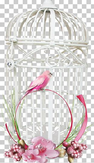 Bird Parrot Cage PNG