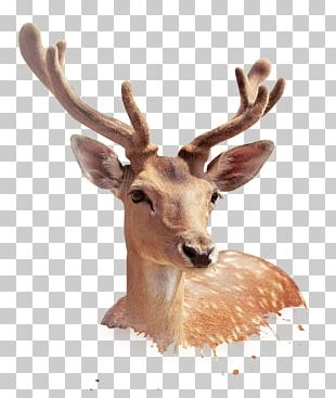 Deer Template Illustration PNG