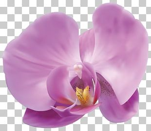 Popular Orchids Flower PNG