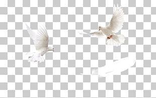 Water Bird Beak Feather PNG