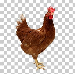 Chicken Meat Broiler Roast Chicken PNG