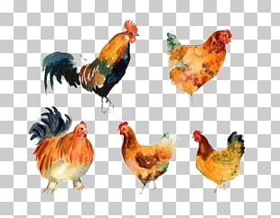 Rooster Chicken Meat Beak Animal PNG