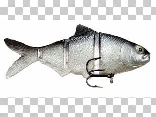 Sardine Castaic Oily Fish Swimbait Milkfish PNG