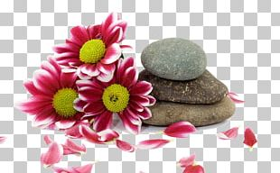 Stone Massage Spa PNG