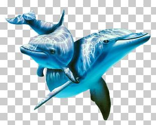 Atlantic Spotted Dolphin Painting Animal PNG