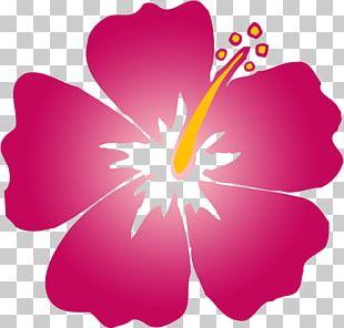 Hawaiian Hibiscus Alyogyne Huegelii Flower PNG