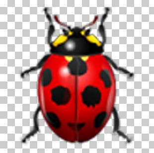 Ladybird Beetle Watercolor Painting Drawing Illustration PNG