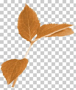 Autumn Leaf Color Limbe PNG