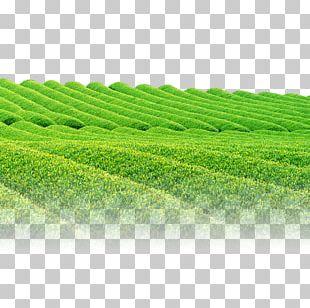 Green Tea Tea Garden PNG