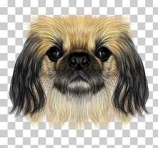 Shih Tzu Pekingese Yorkshire Terrier Chinese Crested Dog Puppy PNG