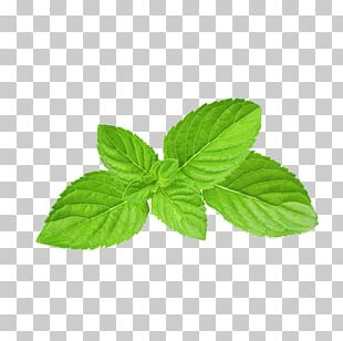 Mentha Spicata Apple Mint Peppermint Menthol Food PNG