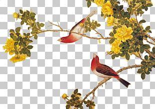 Bird Chinese Painting Moutan Peony Gongbi PNG
