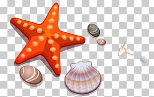 Cartoon Drawing Seashell Starfish PNG