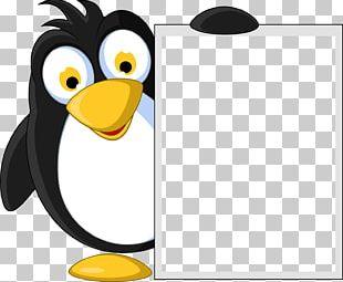 King Penguin Emperor Penguin PNG