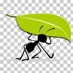 Logo Idea Ant PNG
