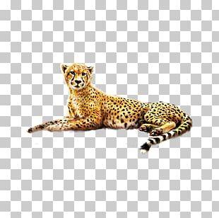 Cheetah Jaguar Felinae PNG
