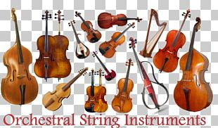 Musical Instruments String Instruments Violin Family Cello PNG