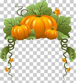 Pumpkin Vine Vegetable PNG