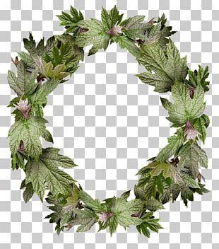 Wreath Frames Flower Floral Design PNG