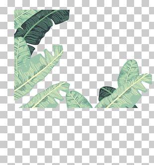 Banana Leaf Euclidean PNG