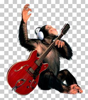 Fender Stratocaster Guitar Amplifier Gibson ES-335 Monkey PNG