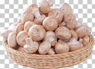Agaricus Edible Mushroom Fungus PNG