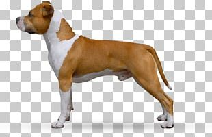 American Staffordshire Terrier Dog Breed Boxer Olde English Bulldogge Staffordshire Bull Terrier PNG