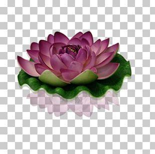 Flower Bouquet Nelumbo Nucifera Garden Roses Cut Flowers PNG