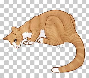 Whiskers Kitten Tabby Cat Dog PNG