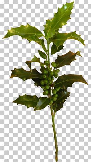 Branch Plant Stem Leaf Creativity PNG