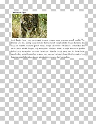 Mammal Dog Iberian Lynx Animal Carnivora PNG