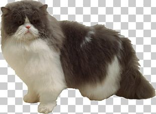 Persian Cat Whiskers Manx Cat Ragamuffin Cat Norwegian Forest Cat PNG