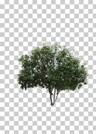 Black And White Leaf Shrub Pattern PNG
