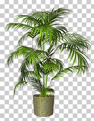 Flowerpot Houseplant PNG