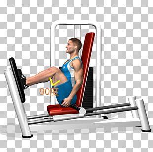 Leg Press Exercise Quadriceps Femoris Muscle Squat PNG