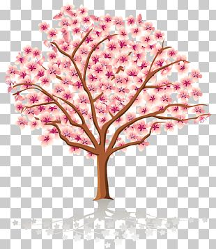Spring Tree Blossom PNG