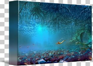 Coral Reef Fish Water Aquariums Ecosystem PNG