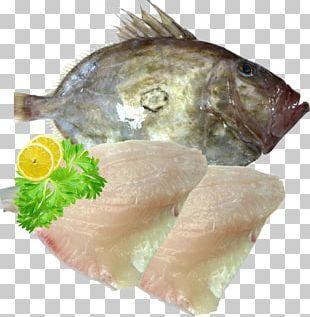 Sashimi Smoked Salmon Recipe Tilapia Fish Fillet PNG