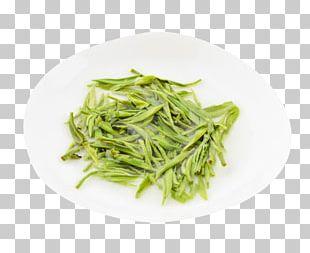 Xinyang Maojian Tea Sencha Green Tea Flowering Tea PNG