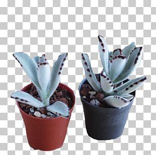 Agave Citroën Cactus M Flowerpot INAV DBX MSCI AC WORLD SF Aloe Vera PNG