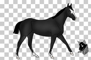 Friesian Horse Stallion Standardbred Sulky Thoroughbred PNG