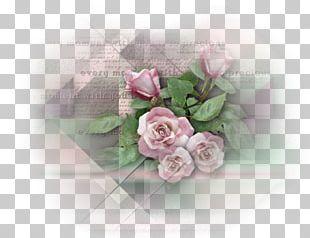 Cut Flowers Garden Roses Floral Design Centifolia Roses PNG