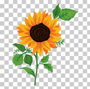 Common Sunflower Drawing PNG