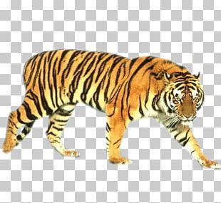 Tiger Cat Beach HVGA PNG