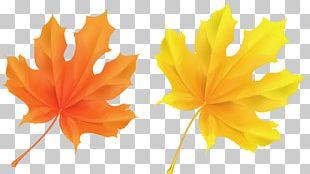 Autumn Leaf Color Orange PNG