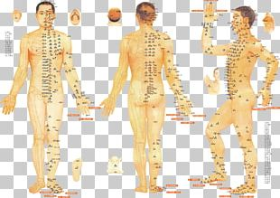 Acupuncture Meridian Traditional Chinese Medicine Therapy Moxibustion PNG