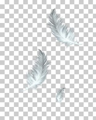 The Floating Feather Bird PNG