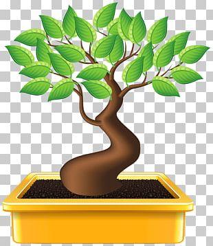 Bonsai Houseplant Tree PNG