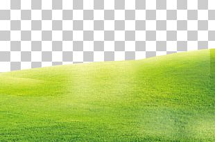 Green Grass Background PNG